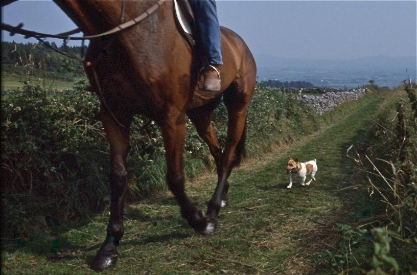 馬を追う子犬/スライゴー、アイルランド