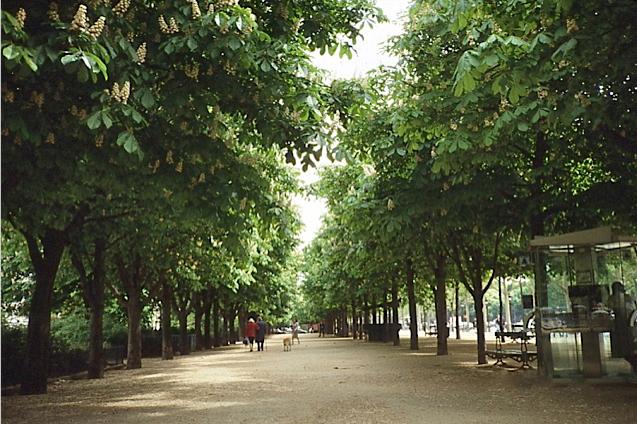 マロニエの歩道、パリ